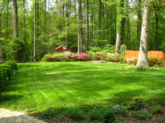 Ohio yard planted with wholesale grass seed